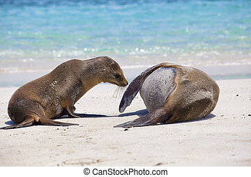 Wake up mommy - Young Sea Lion wants to play with his...
