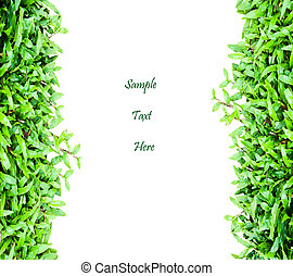 Fresh green grass with space for your text isolate
