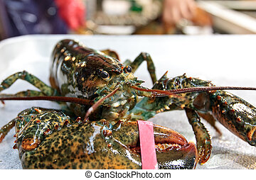 Lobster - Fresh lobster at fisheries wholesale market in...