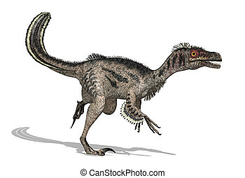 Velociraptor Dinosaur - The velociraptor was a feathered...