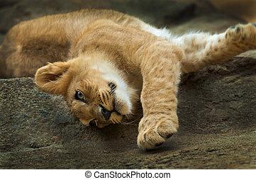 Little Lion - Cute little lion streching after short nap