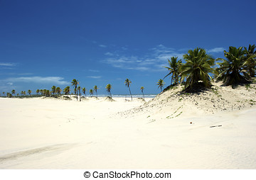 Mangue Seco, Bahia, Brazil - Buggy trip on the sand dunes in...