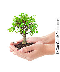Tree in a hands - Hands holding a small bonsai tree
