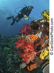 Crinoid - The view of a scuba diver and a colorful reef...