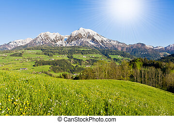 alpine landscape in the springtime
