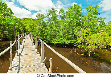 Mangroves - Wooden bridge among the mangroves. Bohol....