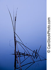 Cattails on the Pond