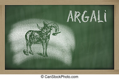 sketch of argali on blackboard Ovis ammon - Ovis ammon...