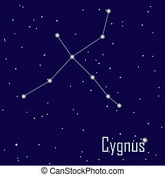 "The constellation "" Cygnus"" star in the night sky. Vector..."