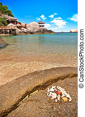 Seashells on the exotic beach - Beach with seashells and...