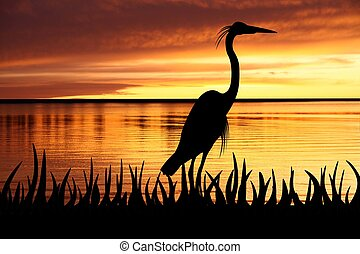 Heron - Bird silhouette against an orange sunset