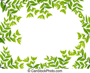 Leaves over white background