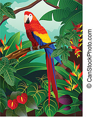 Macaw bird - Vector illustration of macaw bird