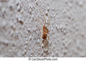 spider on a wall view - small brown spider sitting on a...