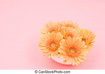 African daisy - Orange african daisy flower on a pink...