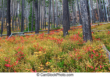 Lewis and Clark National Forest - Montana - Bright autumn...
