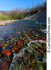 North Fork Flathead River - Montana - Rapids of the North...