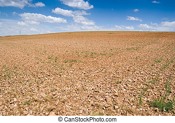 Fallow field in an agrarian landscape in Ciudad Real...
