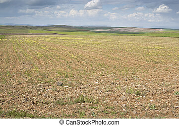 Fallow field in an agrarian landscape in Ciudad Real (Spain)