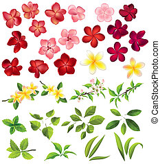 Verzameling, anders, Bloemen, bladeren, witte