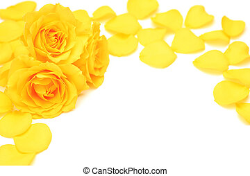yellow rose - I took a yellow rose in a white background