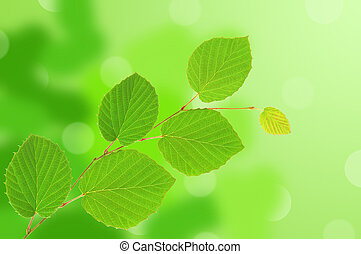 linden green leaves over nature background