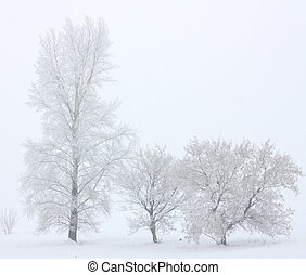 A winter scenery with a trees
