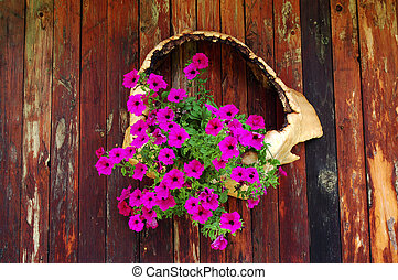 Fuchsia flowers hanging on wooden wall