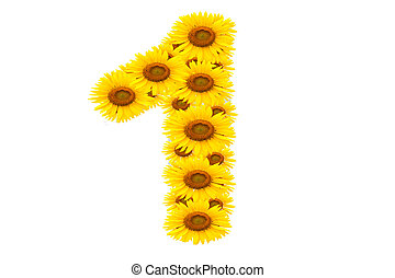 Number 1,  Sunflower isolate on White background