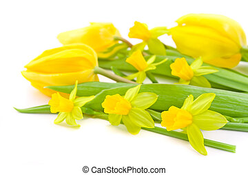 tulips and daffodils - close-up of tulips and daffodils on...