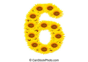Number 6,  Sunflower isolate on White background