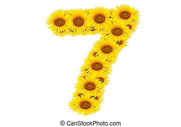 Number 7,  Sunflower isolate on White background