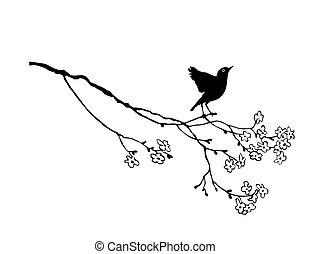 bird on branch on white background