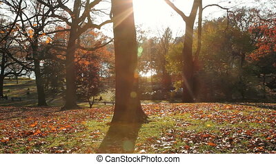 Autumn park. - Sun shining through trees at the park. High...