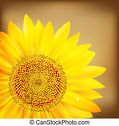 Vintage Sunflower And Old Paper