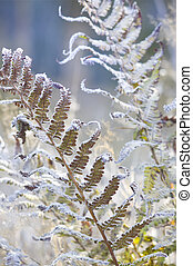 Hoarfrost on plant stemsNature composition
