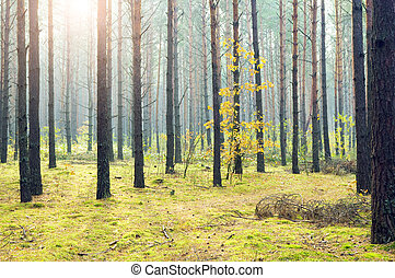 morning in autumn wood.Nature composition.