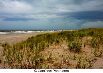 Sand dunes behind beach - Sand dunes with plantings behind a...