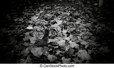 falling leaves full on ground,black and white film.
