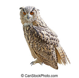 Owl - An owl isolated over white background