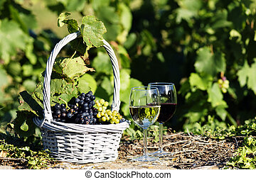 grape and wine - two glasses of wine and grapes in a basket...
