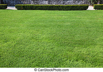 Magnificent lawn - Magnificent green lawn in beautiful...