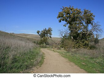 Lower Aliso Trail 4 - Trees and grass on a fire road, Chino...