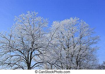 Frost winter tree