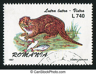 Lutra lutra - ROMANIA - CIRCA 1997: stamp printed by...