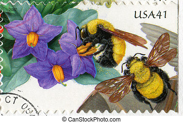 Bumblebee - UNITED STATES - CIRCA 2007: stamp printed by...