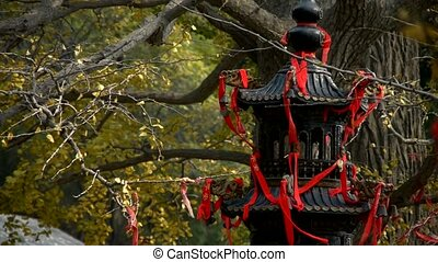 Incense burner and ginkgo tree in...