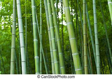 Bamboo forest - Beautiful bamboo forest in near Arashiyama,...