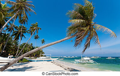 philippine beach - single palm tree on a philippine beach