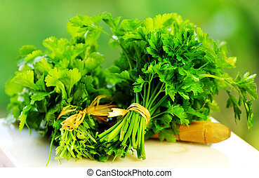 cilantro and  parsley herbs